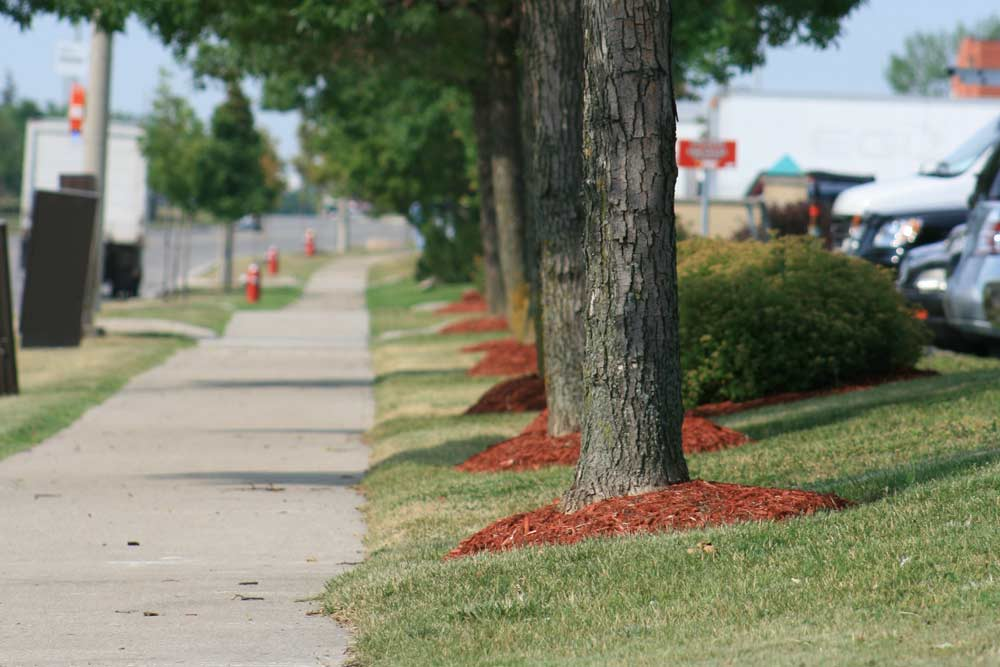 commercial-landscaping-4