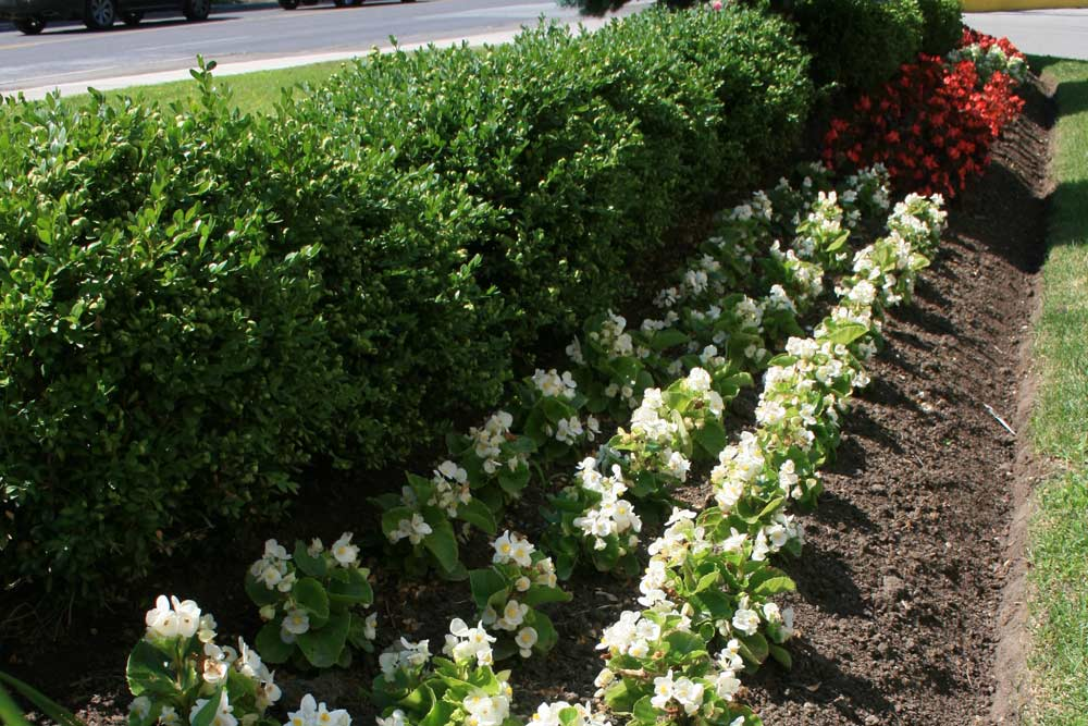 commercial-landscaping-6